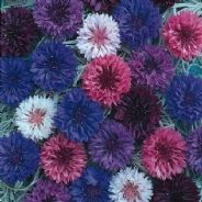 Cornflower Polka Dot mix - 10 grams - 1kg